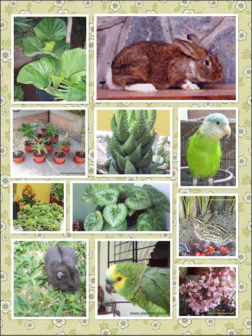 Plantas y Mascotas