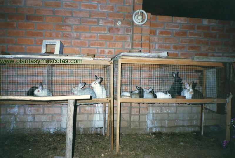 Jaula para conejos plantas y mascotas for Jaulas para cria de peces