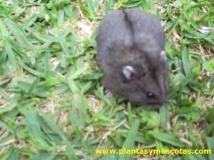 Hamster en el jardín
